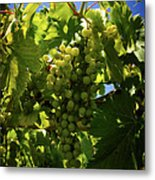 Green Grapes On The Vine Metal Print