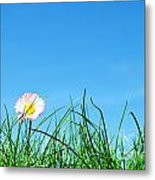 Green Grass And A Flower Metal Print