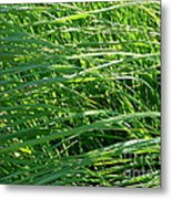 Green Grass Growing Metal Print
