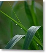 Green Grass Of Summer Metal Print