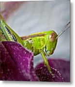 Green Grasshopper I Metal Print