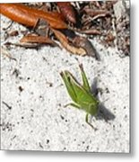 Green Grasshopper Metal Print