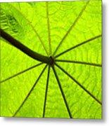 Green Growth Metal Print