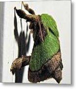 Green Hair Moth Metal Print