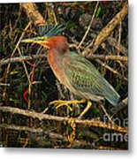 Green Heron Basking In Sunlight Metal Print
