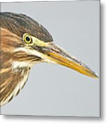 Green Heron Close-up Metal Print