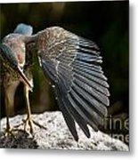 Green Heron Pictures 382 Metal Print