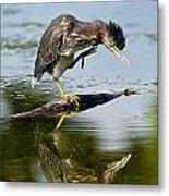 Green Heron Pictures 488 Metal Print