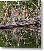 Green Heron Reflections Squared Metal Print