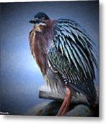 Green Heron Vignetted  Metal Print