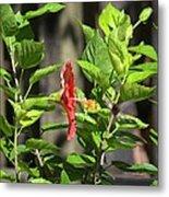 Green Hummingbird On Red Hibiscus Flower 2 Of 10 Metal Print