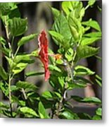 Green Hummingbird On Red Hibiscus Flower 5 Of 10 Metal Print