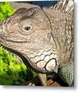Green Iguana Face Metal Print