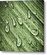 Green Leaf Background With Raindrops Metal Print