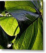Green Leaf I Metal Print
