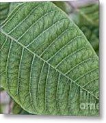 Green Leaf Macro Metal Print