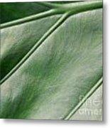 Green Leaf Up Close 2 Metal Print