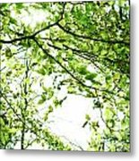 Green Leaves Metal Print by Blink Images