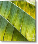 Green Leaves Series 14 Metal Print