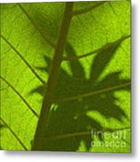 Green Leaves Series 3 Metal Print