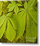 Green Leaves Series Metal Print by Heiko Koehrer-Wagner