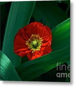 Green Loves Red Loves Green Metal Print