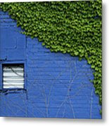 green on blue IMG 0964 Metal Print