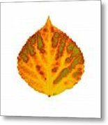 Green Orange Red And Yellow Aspen Leaf 1 Metal Print