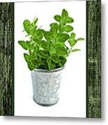 Green Oregano Herb In Small Pot Metal Print