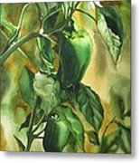 Green Peppers From Our Garden Metal Print