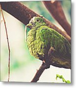 Green Pigeon Metal Print