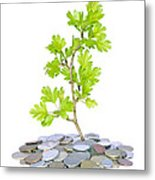 Green Plant And Money  Metal Print