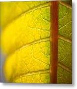 Green Poinsettia Leaf Metal Print