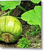 Green Pumpkin Metal Print