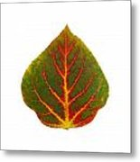 Green Red And Yellow Aspen Leaf 4 Metal Print