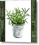 Green Rosemary Herb In Small Pot Metal Print