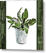 Green Sage Herb In Small Pot Metal Print by Elena Elisseeva