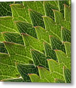 Green Scales Of A Dragon Metal Print