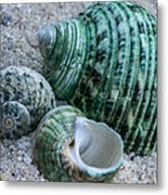 Green Seashells Metal Print