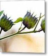 Green Spiky Wild Flowers Metal Print