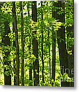 Green Spring Forest Metal Print
