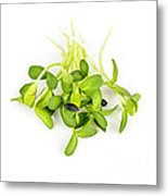 Green Sunflower Sprouts Metal Print by Elena Elisseeva
