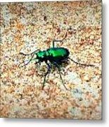 Green Tiger Beetle Metal Print