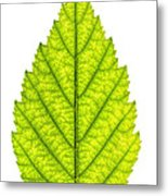Green Tree Leaf Metal Print