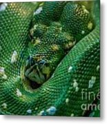 green tree python Macro Metal Print