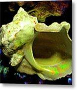 Green Turban Seashell Metal Print