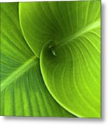 Green Twin Leaves Metal Print
