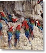 Green-winged Macaw Metal Print