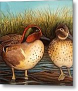 Green Winged Teal Metal Print
