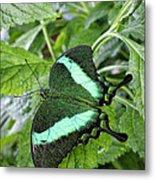 Green Wings 2 Metal Print